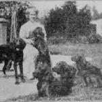 history of the irish setter