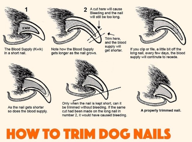 nail-trimming-for-dogs