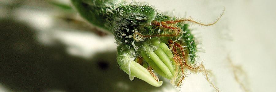 Hormonas vegetales e learning biologia for Hormonas en las plantas