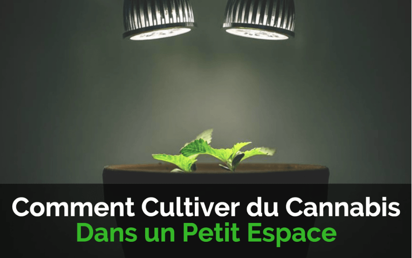 comment cultiver du cannabis dans un petit espace. Black Bedroom Furniture Sets. Home Design Ideas