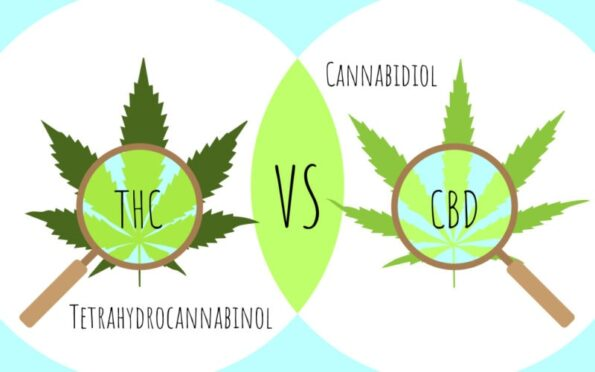 Articolo blog: differenze tra thc e cbd