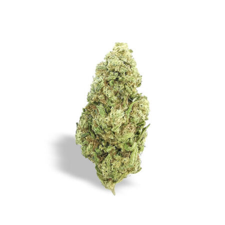Cima o infiorescenza di lemon skunk cannabis light