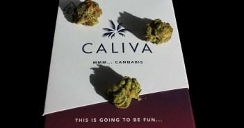 Caliva Black Jack, Marijuana Strain Reviews
