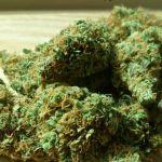 """La venta de marihuana en farmacias comenzará """"entre la semana próxima y la siguiente"""", dijo vicepresidente de Centro de Farmacias"""