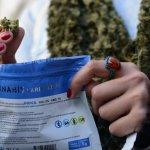 Venta de marihuana en farmacias tiene 50% de desaprobación, según Opción Consultores