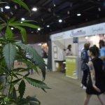 En Expocannabis del LATU venden semillas ilegales de marihuana