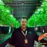 Anuncio de Sessions genera temores en sector de la marihuana