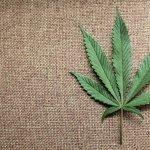 El Senado de México se prepara para un debate sobre la legalización de la marihuana