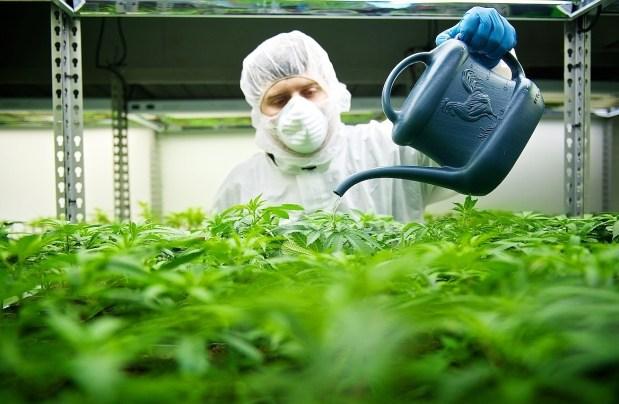 ACMPR License to Grow Medical Marijuana Canada