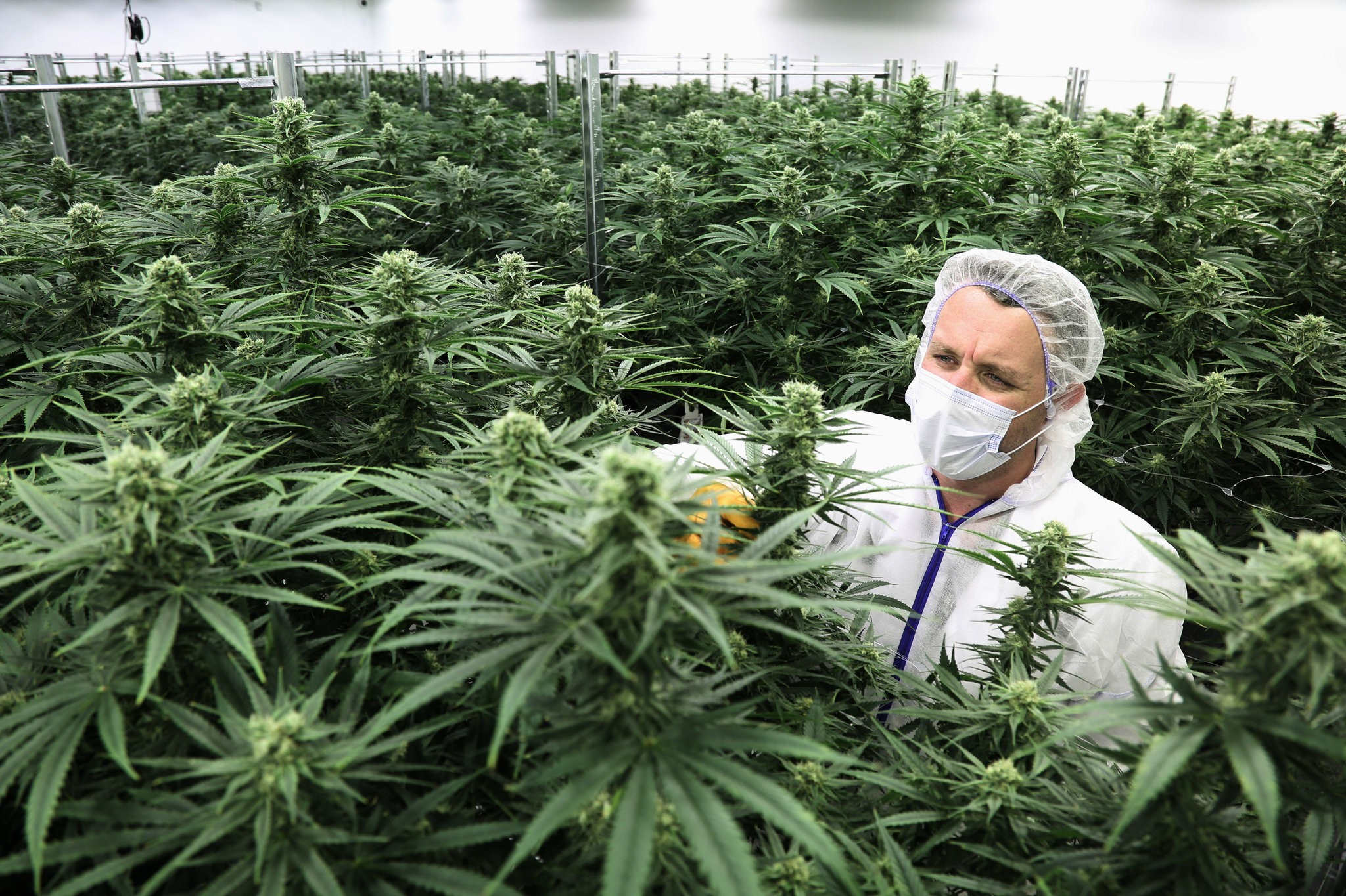 Newfoundland Cannabis Rules