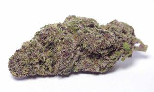 Goo marijuana for ADHD