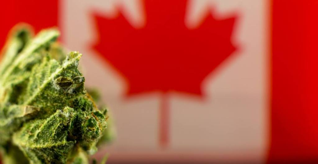 Growing weed in Canada