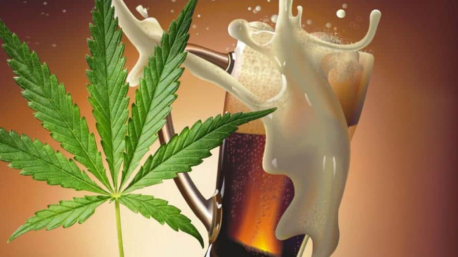 beer infused with cannabis
