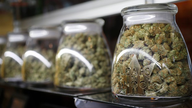Cannabis buds in sealed glass containers