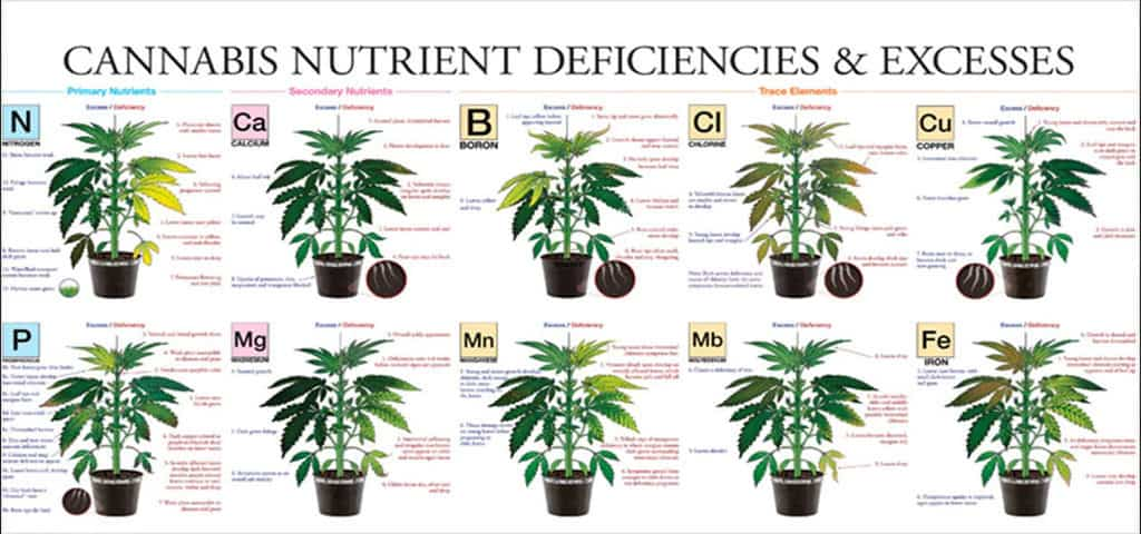 Chart Of Cannabis Plant Nutrient Issues