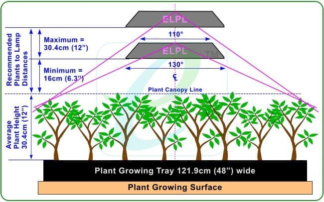 Diagram Showing Height Of Grow Lights Vs Plant Canopy Line