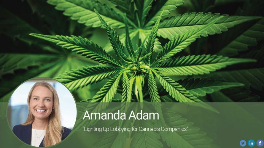 Lighting Up Lobbying for Cannabis Companies