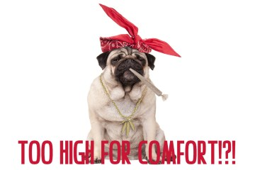 Too High For Comfort?!? What to do when you've gotten too high!