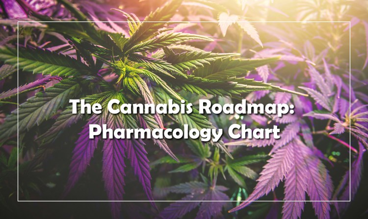 The Cannabis Roadmap: Pharmacology Chart