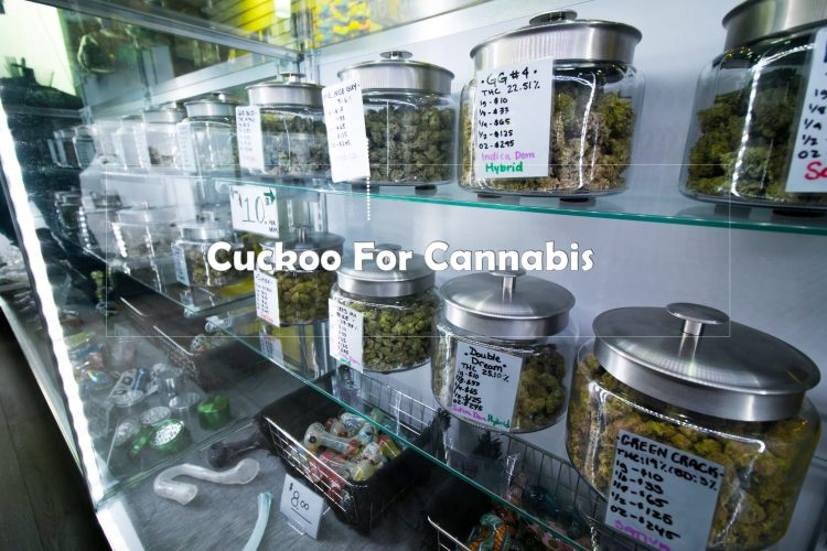 Cuckoo For Cannabis - An Industry In Chaos
