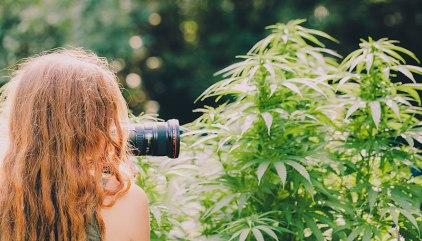 Marijuana Photography Jobs: Cannabis Jobs for Freelance