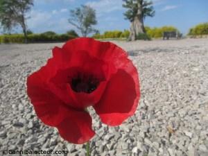 A fleur des saisons - Claude Vella
