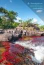 Caño Cristales, el río de los cinco colores / Fotografía por Mario Carvajal