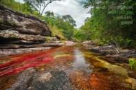 Caño Cristales, el río de colores, en La Macarena Meta / Fotografía por Mario Carvajal