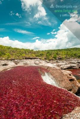 Lecho del Río Caño Cristales en la Serranía de La Macarena / Fotografía por Mario Carvajal