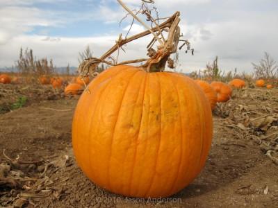 Pumpkin Trip 5