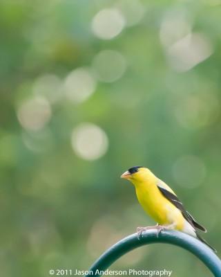 Avian Photography 2