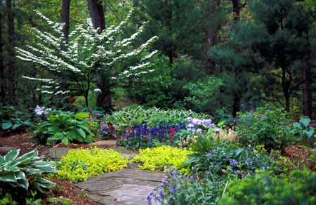 Shady lawn alternatives - Gardening in Michigan on Shady Yard Ideas  id=16411