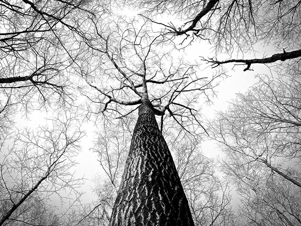 El viaje a través del árbol de las memorias uterinas