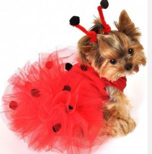 costume carnevale cane 3