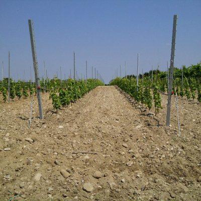 Volta Mantovana-20110627-00245