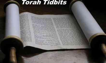 Torah Tidbits