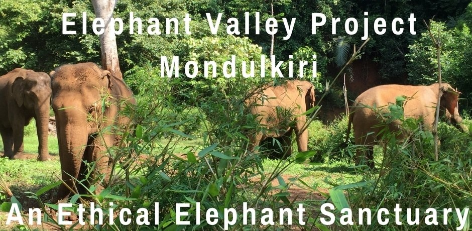 Elephant Valley Project Mondulkiri – An Ethical Elephant Sanctuary   Cambodia