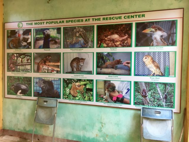 Phong Nha-Ke Bang Wildlife Rescue Centre in Vietnam