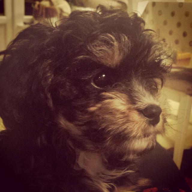 Cutest dog in the world award