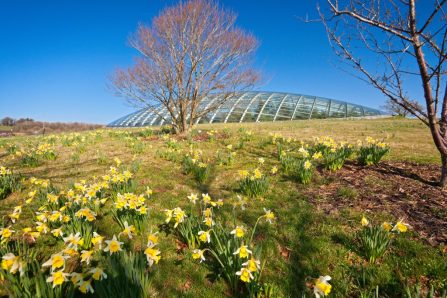 The National Botanical Gardens of Wales