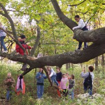 Let the kids run free in the woods, make forts and climb trees!