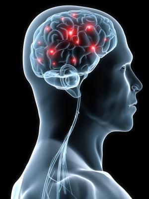 Cervello Nutrizione e Benessere
