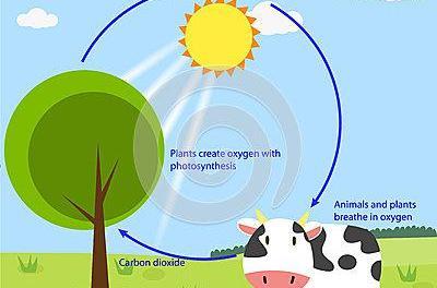 Il cambiamento: dalla chimica che inquina alla chimica per l'ambiente*