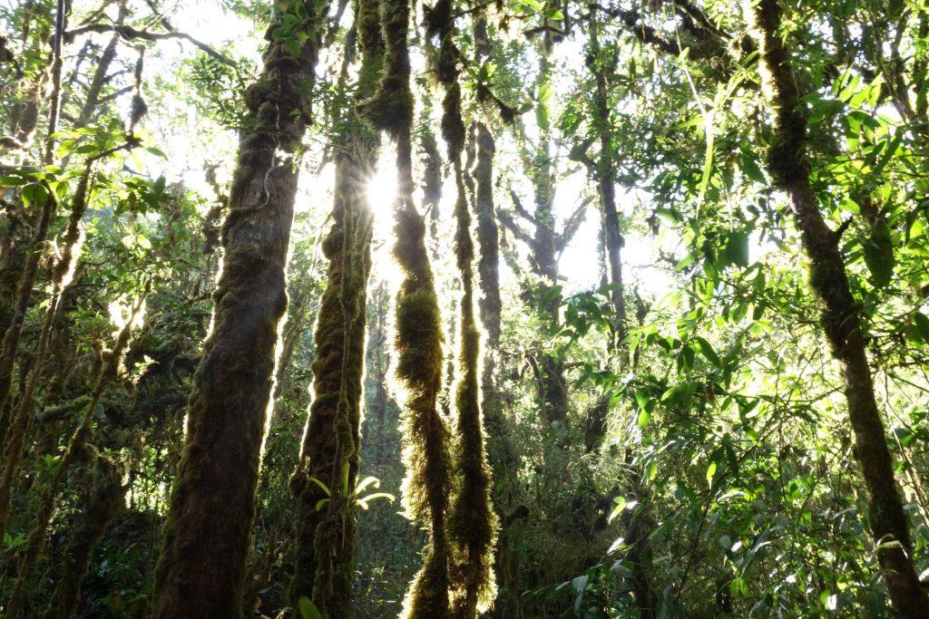 Costa-Rica Cerro Muerte