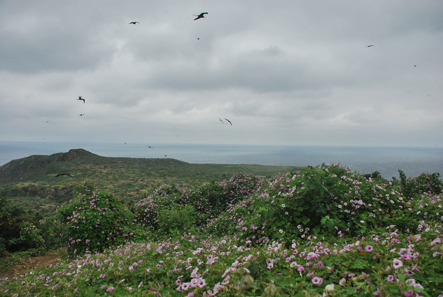 Isla PLata birdswatching