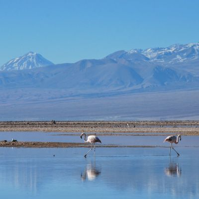 Atacama_Flamands