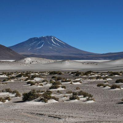 Desert_Ollague