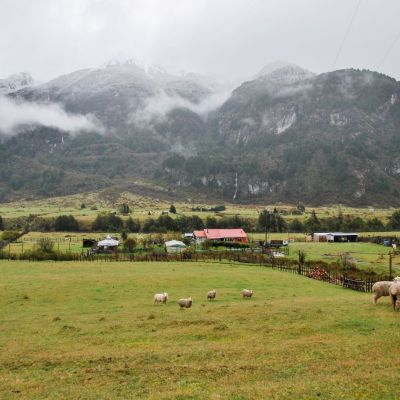 Carretera Austral_ Moutons