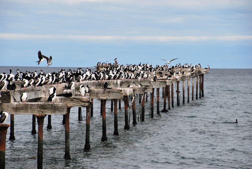 Punta Arenas_Cormorans_Jetée