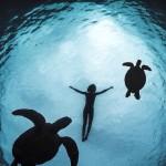 Nage avec les tortues dans la mer des carraïbes...
